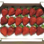 イチゴをお取り寄せ 知人からおすすめされた千葉の苺園から産地直送